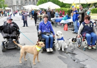 Die Hunde für Handicaps Akteure