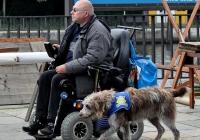 Foto mobilitätseingeschränkter Besucher mit Begleithund