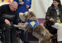 Foto Hunde für Handicaps auf der Bühne